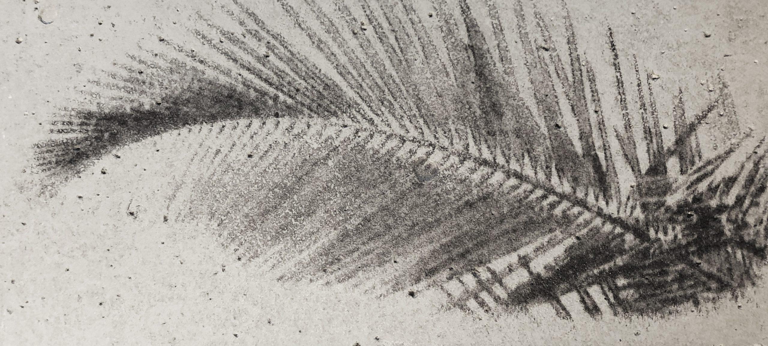 Conclad Decor: decoro foglia di palma, design by Silvia Fregoli stampa su foglio di  cemento non cemento